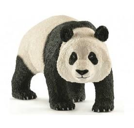 Giant Panda, Male